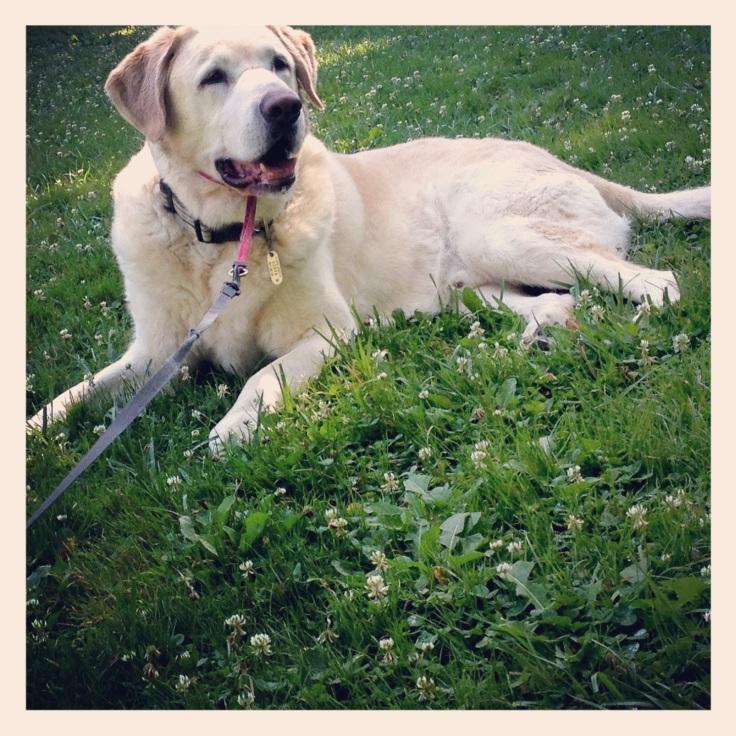 My amazing dog, Jasper